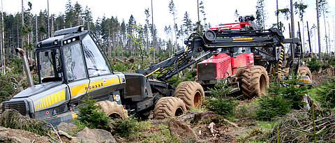Salvage logging in the Bavarian Forest National Park