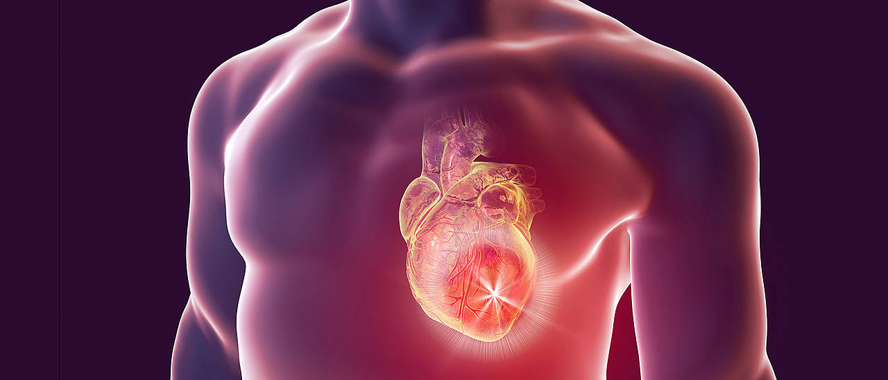 Heart Attack Substitute Muscle Thanks To Stem Cells Universitt