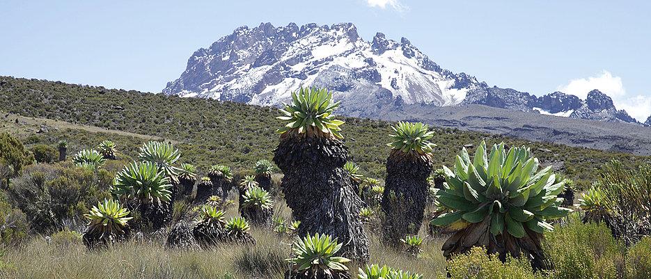 Ecossistema com vegetação de montanha no Monte Kilimanjaro. (Imagem: Andreas Hemp)