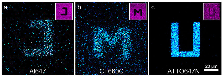 Confocal fluorescence images of glass surfaces coated with the cyanine dyes Alexa Fluor 647 (a) and CF660C (b) and with carborhodamine dye ATTO647N (c) after light excitation at 568 nanometres (nm). By exciting the red-absorbing dyes at 640 nm in certain areas (negative images top right), dyes are photoconverted there and it is possible to write letters on the surface that were excited at 568 nm and fluoresce at about 580 nm. The carborhodamine dye shows more efficient photobluing than the cyanine dyes.