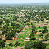 A typical West African landscape: flat, with many single trees, fields and settlements in between. (Photo: Michael Thiel / University of Würzburg)