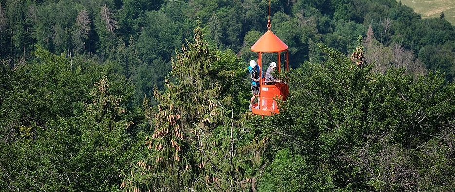 A crane takes the researchers to the uppermost treetops to study the seasonal fluctuations of the water balance.